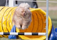 agility-jump-Nueboree-Choc-Nougat