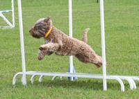 agility-long-jump-greydove-giacinta