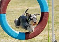 agility-tyre-scottromar-flynnders-fortune